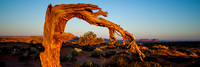 An 3:1 panoramic image of a bare tree framing the famous rock formations at Monument Valley in Utah.