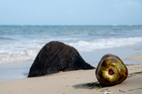 A coconut sits on the beach on Little Corn Island in Nicaragua.